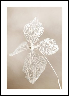 Dried flower Poster