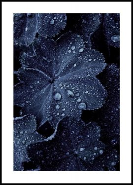 Blue Leaf Droplets Poster