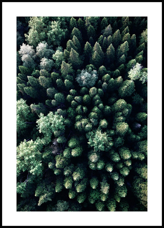 Forest From Above Poster